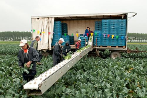 broccoli biologische boerderij winkel Zeeuwse Akker Graauw Zeeland