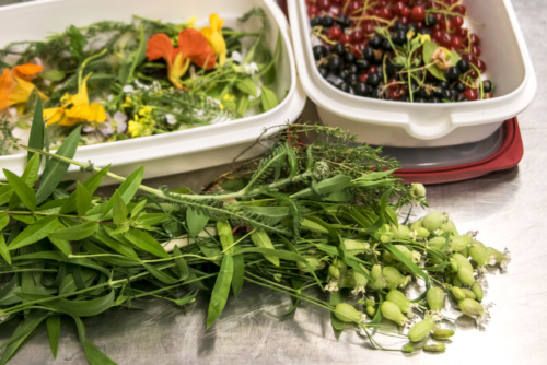 eten uit het voedselbos bij Voedselbron Graauw Zeeland
